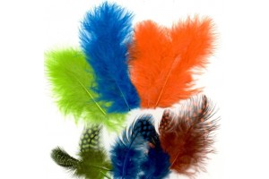 Feather, assortment neon colors